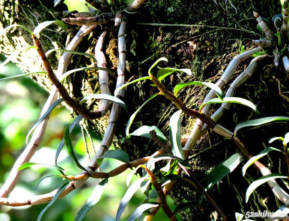 农村里很常见的10种野生植物,被称为 灵药 城里人可能图片